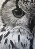 """painting """"Owl"""""""