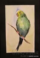 Painting ''Aquarelle - Parrot'' 1