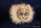 Brooch made of felt ''Cat'' 2